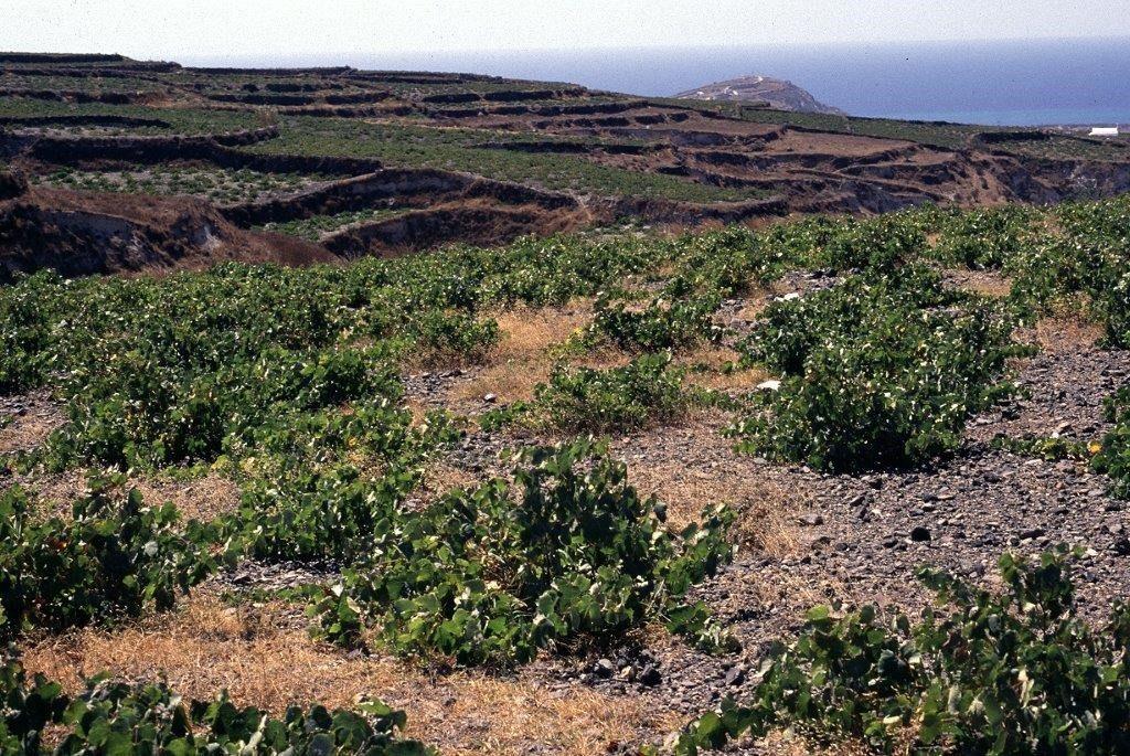 Gaia fra Santorini: Det beste av gresk vin